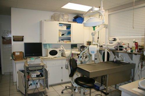 Lakeside-Animal-Hospital-Dental-Suite-and-Digital-Dental-X-Rays