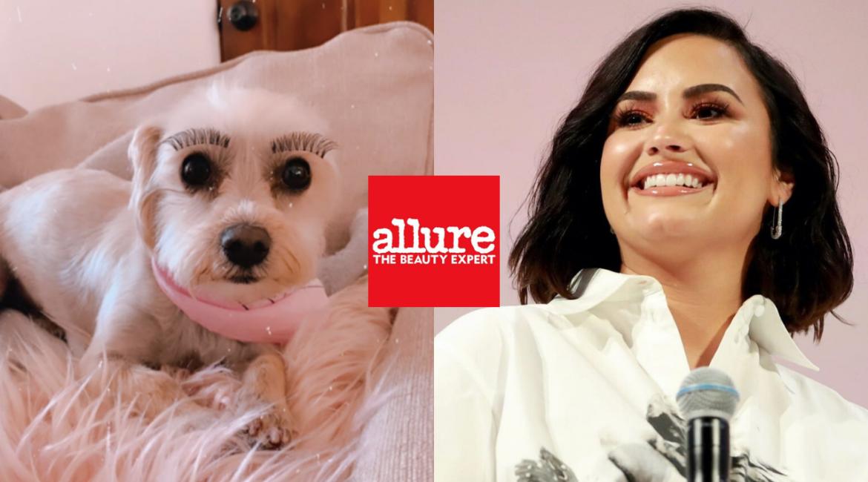 Allure Demi Lovato False Eyelashes on Dog