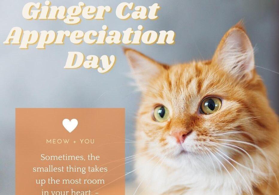 Ginger Cat Appreciation
